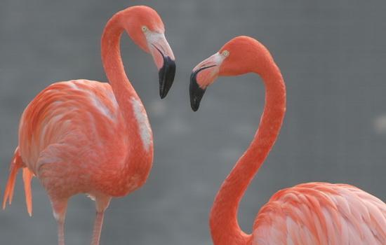 Птицам нравится стоять на одной ноге