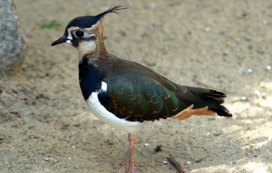 Птицы машут крыльями вверх и вниз