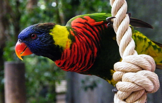 Сколько живут попугаи