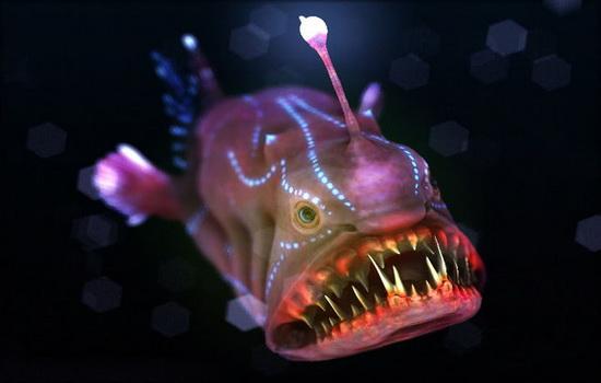 Интересные факты про рыбу-удильщика (Anglerfish)
