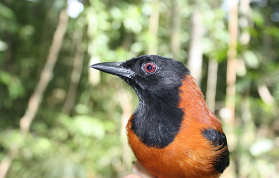 Ядовитых птиц не бывает
