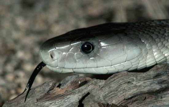 Змеи — холодные и скользкие