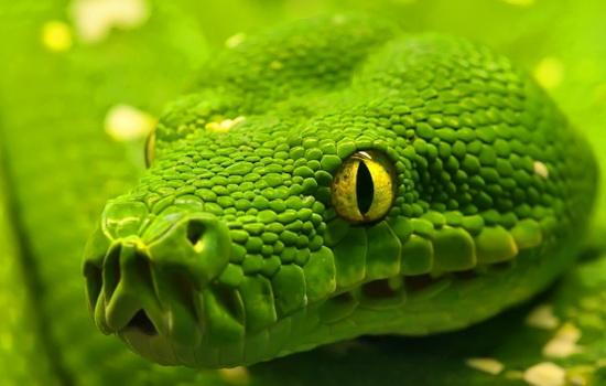 Интересные факты про Змей (Snake)
